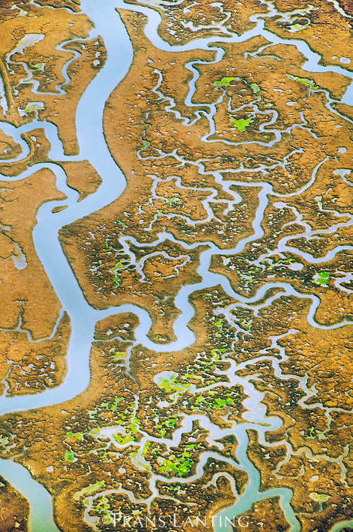 Tidal creeks in salt marsh, Elkhorn Slough (aerial), Monterey Bay, California