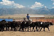 Wilsall Ranch Rodeo, Montana, Team Penning, Lazy SR Ranch Team, Kurt Mraz, Crazy Mountains