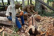 Men of Libinza tribe making mokoto drums, Ngiri River area, Democratic Republic of the Congo (ex Zaire).