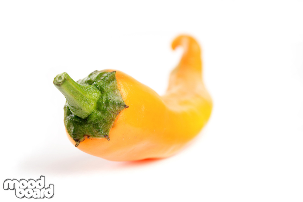 Close-up of yellow chilli pepper