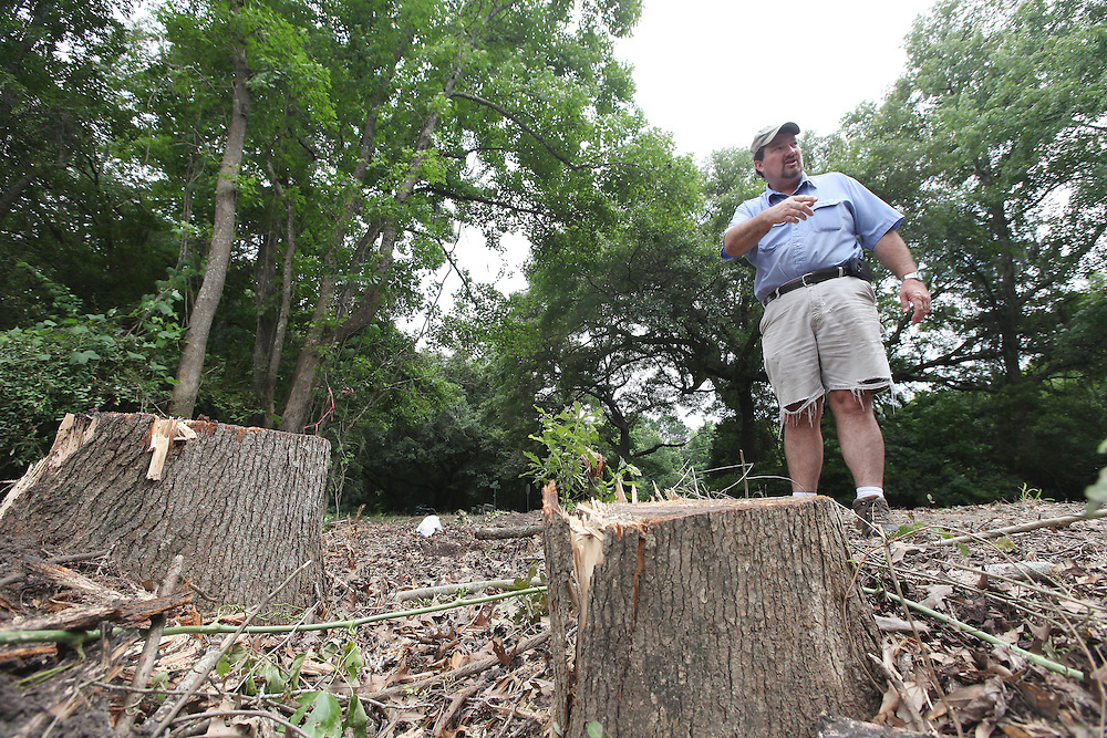 On Thursday, June 20, 2013, Thomas Legare examines the stumps left after trees were cut down along River Road on Johns Island, where he thinks the removal to make way for the new Stono View Plantation community near Fishland Drive is threatening the island's character. (ANDREW KNAPP/STAFF)