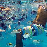 Mexico Rocks Reef