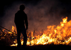 "A participant at the ""Flames in the Flint Hills"" observes the burning prairie at the Flying W Ranch near Clements, Kansas. This agritourism event allows ranch guests to take part in lighting the prescribed burns. Prairie grasses in the Kansas Flint Hills are intentionally burned by land mangers and cattle ranchers in the spring to prepare the land for cattle grazing and help maintain a healthy tallgrass prairie ecosystem. The burning is also an effective way of controlling invasive plants and trees. The prairie grassland is burned when the soil is moist but grasses are dry. This allows the deep roots of the grasses to survive and the burned grasses on the soil surface return as nutrients to the soil. These nutrients allow for the rapid growth of new grass. After approximately two weeks of burning, new grass emerges. Less than four percent of the original 140 million acres of tallgrass prairie remains in North America. Most of the remaining tallgrass prairie is in the Flint Hills in Kansas."