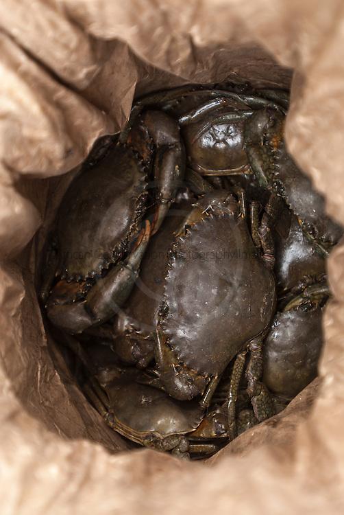Live Mangrove Crabs, for sale in a hessian bag at a fish market, Malindi, Kenya