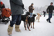 Spectators with dogs at White Turf 2011 horse racing event in St Moritz, Switzerland.