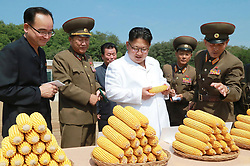Undated photo from North Korean News Agency shows North Korean leader Kim Jong-un visiting a corn farm, in an undisclosed location, North Korea. Photo released August 2017. Photo by Balkis Press/ABACAPRESS.COM