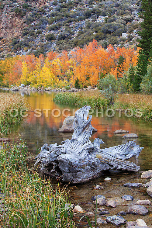 Fall Foliage at North Lake in Bishop California