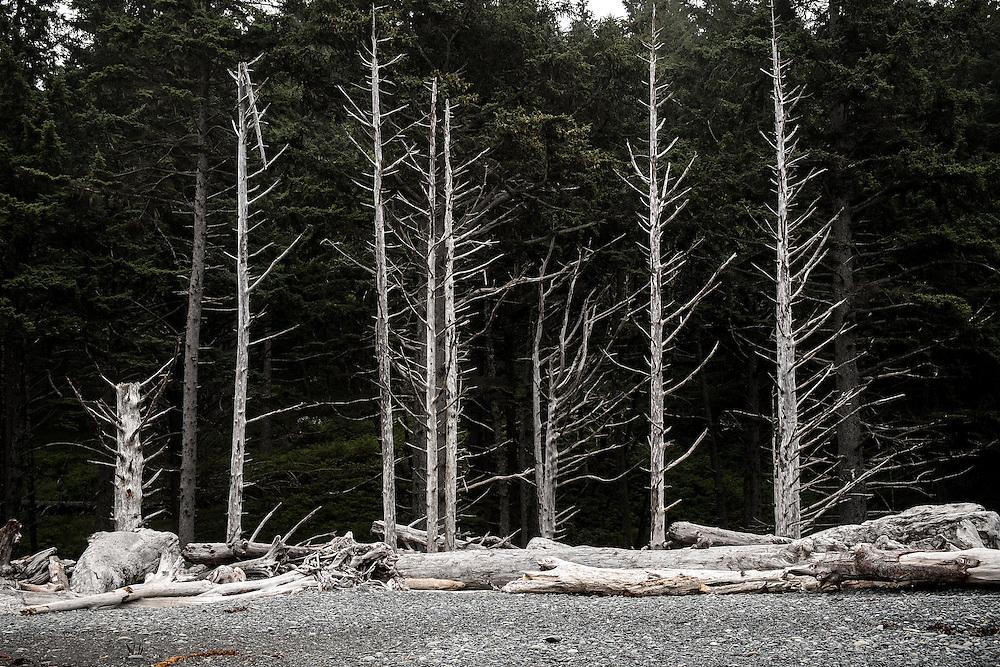 Trees at Rialto Beach