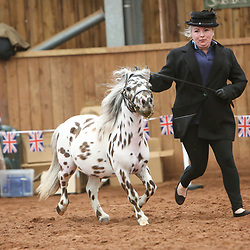 Miniature Horse Club of GB Show July 2019