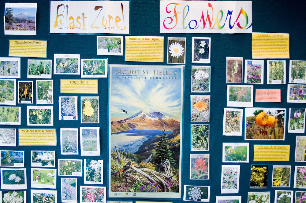 Interpretive Display at Coldwater Ridge Visitor Center Outlining the Different Types of Native and Non-Native Wildflowers and Plants Surrounding Mt. St. Helens. Mt. St. Helens National Volcanic Monument, Washington, US, September 2005