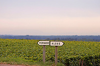 Vineyards between Pernand Vergelesses and Aloxe Corton, Cote d'Or France.