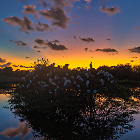 South Florida landscape photography from nature photographer Juergen Roth showing the waterscape of Wakodahatchee Wetlands in magical sunrise light. Wako is an amazing nature area for viewing and photographing birds and other wildlife in Florida. <br />