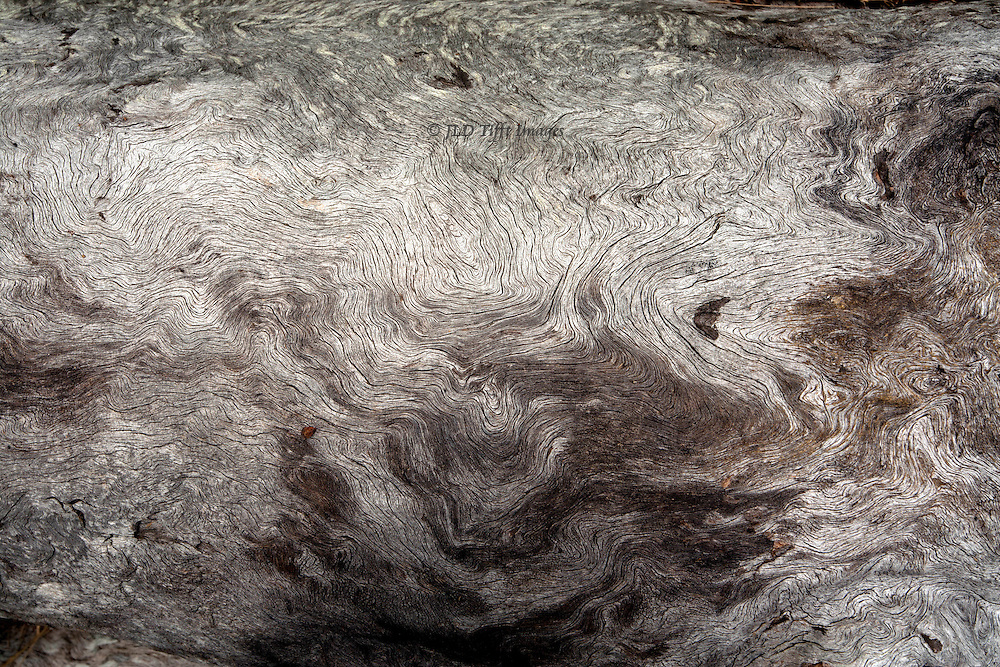 Closeup of a dead tree trunk, showing the silvery tracings of its grain.  An abstract pattern.