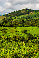 Lush farming country, Kagamba, Ntungamo District, Uganda.