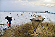 Nederland, Ubbergen, 22-1-2013Schapen  in een besneeuwd weiland op een koude dag.Door de sneeuw moeten ze bijgevoerd worden met hooi.Foto: Flip Franssen/Hollandse Hoogte