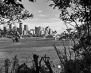 Sydney from Taronga