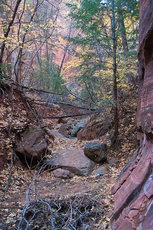 Canyon floor littered with broken tree brush, Arizona