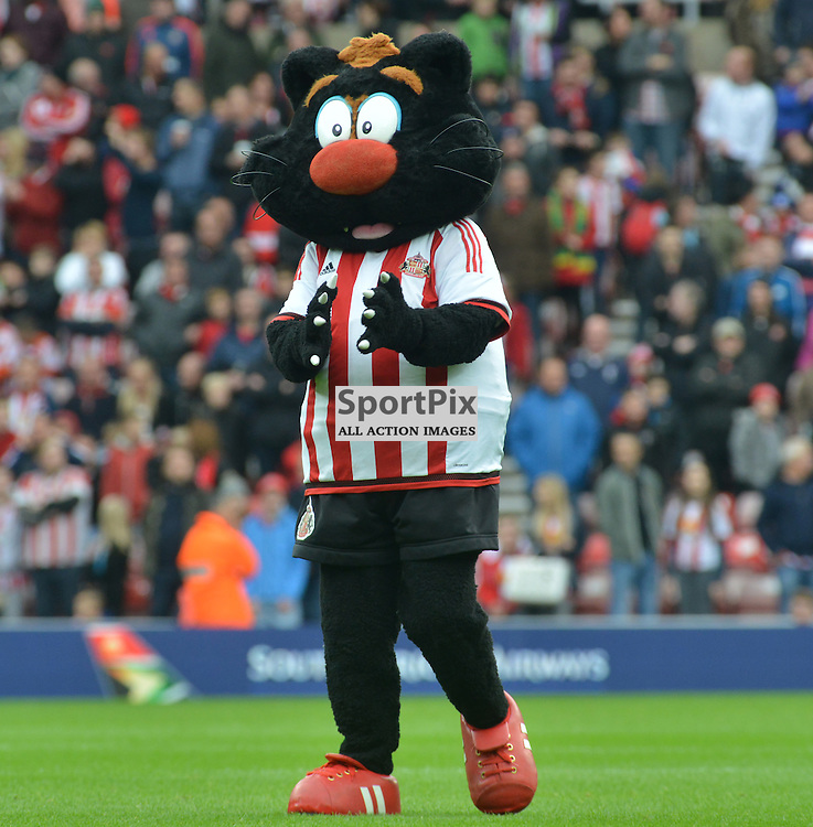 One of Sunderland's mascots a black cat prior to the derby against Newcastle United......(c) BILLY WHITE | SportPix.org.uk
