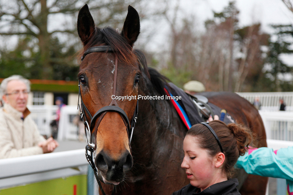 Novellen Lad in the winners enclosure