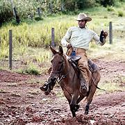 cavalierau galop sur une mule dans une fazenda
