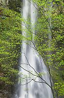 Double Falls, Silver Falls State Park, Oregon