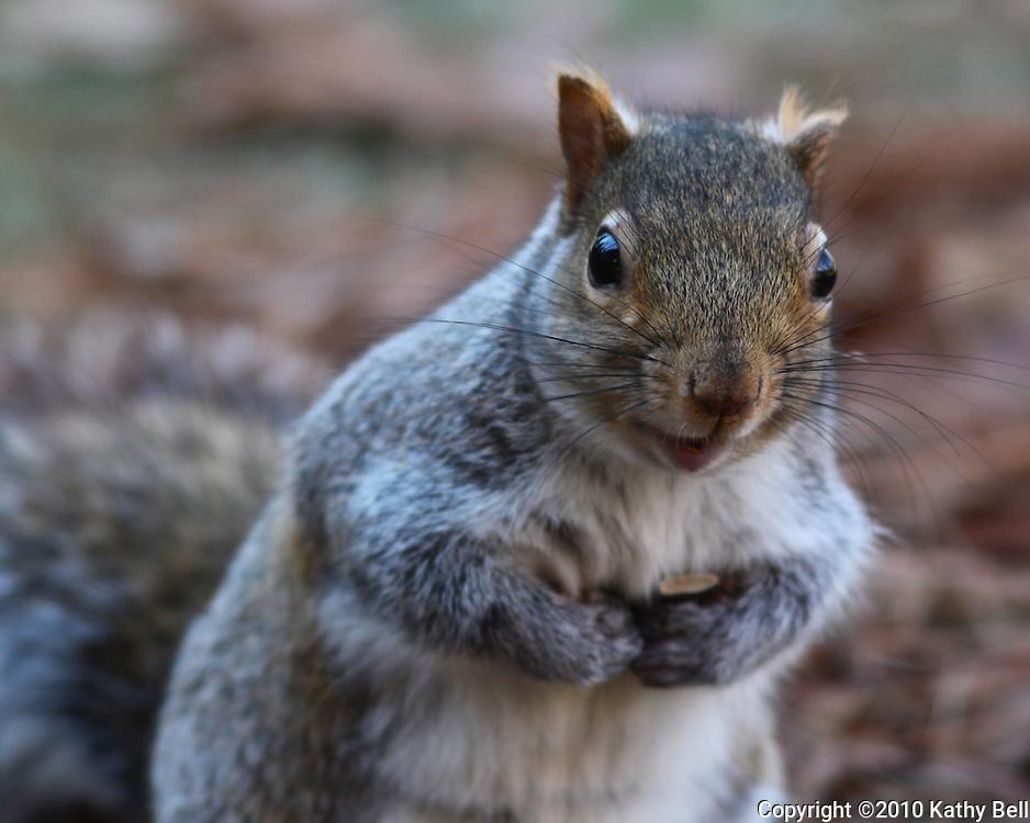 Image of asquirrel