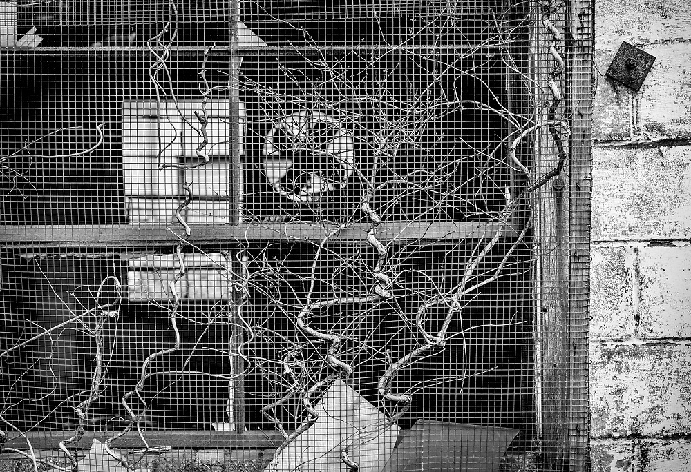 The window frame and wire screen contrast against the negative space inside, and the positive space windows looking outside on the far side of this abandoned building.  The curved, organic vines also contrast with the square shapes found throughout the composition.