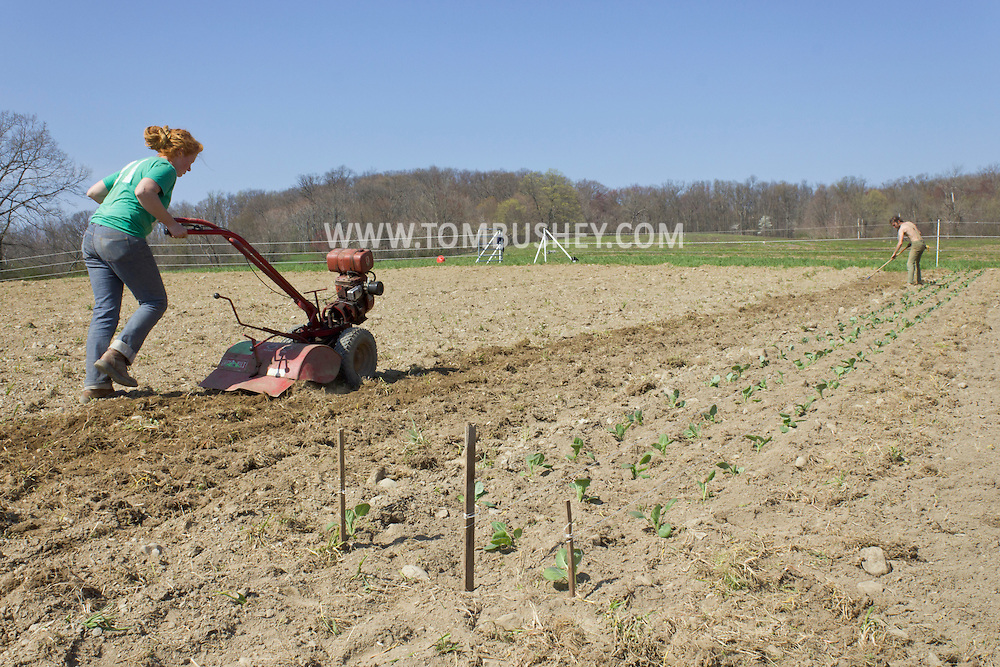 Chester, New York - Spring planting at Peace and Carrots Farm  on April 23, 2013. The CSA (Community Supported Agriculture) farm is in its first growing season.