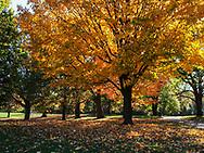 Fall foliage in Prospect Park, Brooklyn, NY