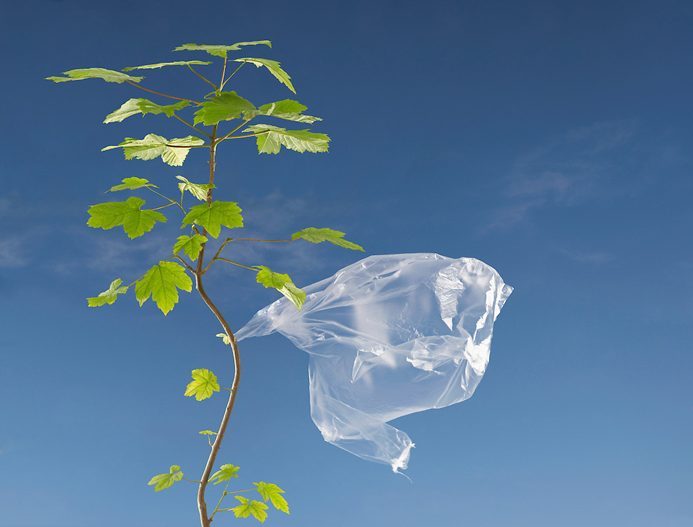 Plastic bag caught on tree