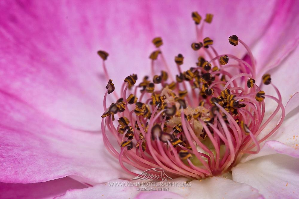 Stamen of flower resembling bees