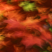 """Holiday Dancing"" <br />