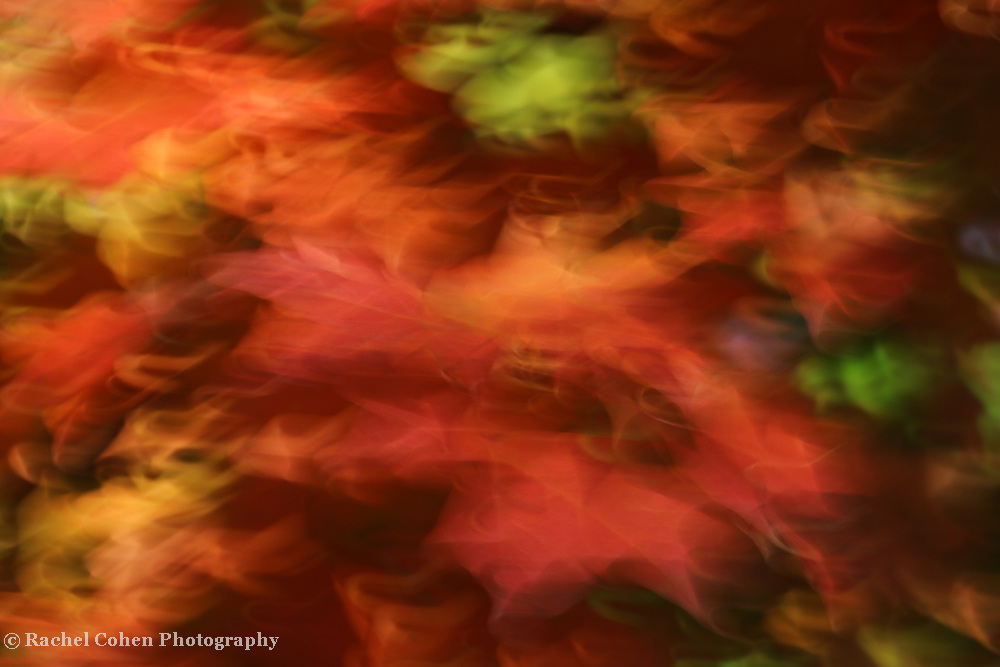 &quot;Holiday Dancing&quot; <br />