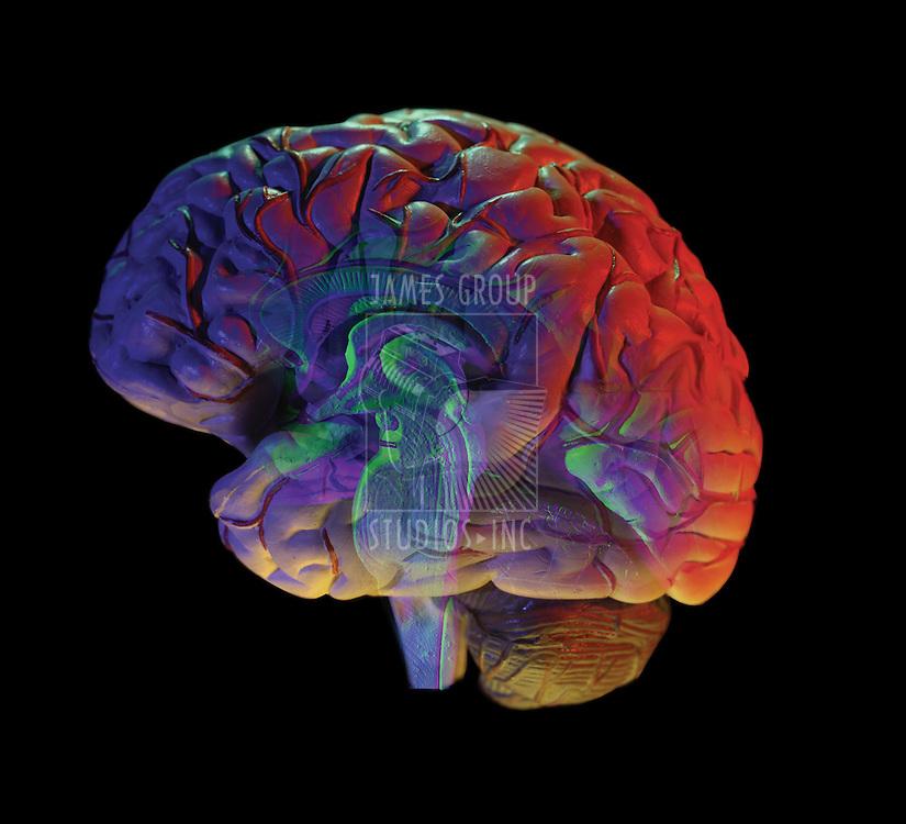 human brain on black background