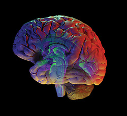 human brain on black background