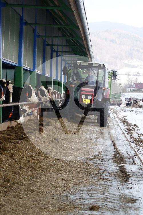 TSCHECHIEN - JESENIK - Kühe werden mit einem Futtermischwagen mit Grassilo gefüttert - 28. Dezember 2003 © Raphael Hünerfauth - http://huenerfauth.ch