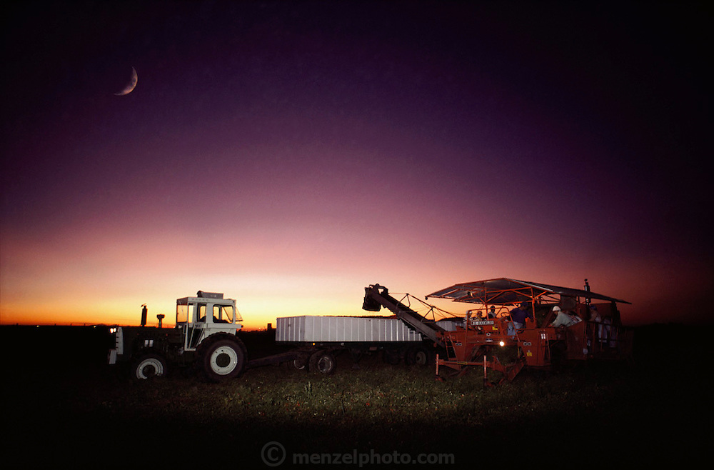 Tomatoes: Blackwelder tomato harvester, near Stockton, California at dusk with moon. USA