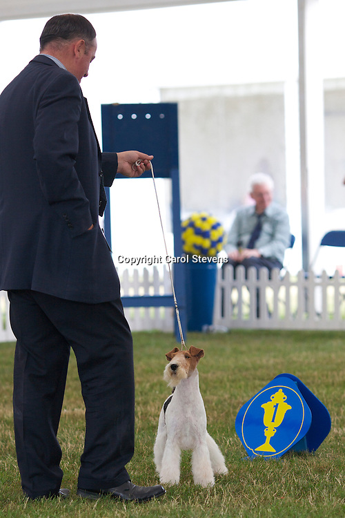 Travella Striking Steel  <br />