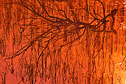 Trees and water at sunset<br />Duck Mountain Provincial Park<br />Manitoba<br />Canada