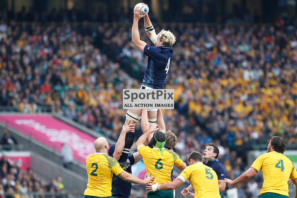TWICKENHAM, ENGLAND - OCTOBER 18: line out won by Richie Gray during the 2015 Rugby World Cup quarter final between Scotland and Australia at Twickenham Stadium on October 18, 2015 in London, England. (Credit: SAM TODD | SportPix.org.uk)