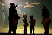 Patrons get a lesson on sharks at the Cleveland Aquarium on Monday, Feb. 6, 2012