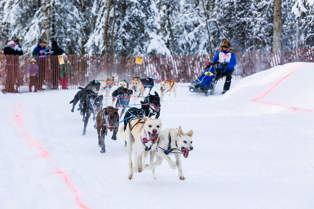 Musher Arleigh Reynolds competing in the Fur Rendezvous World Sled Dog Championships at Goose Lake Park in Anchorage in Southcentral Alaska. Winter. Afternoon.