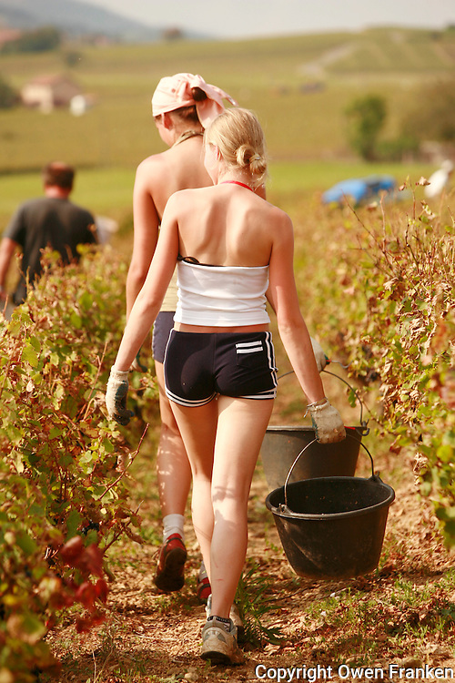 harvestoing grapes in Beaujolais - the workers are Polish