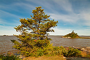 Jack pine on rocky shore of Lake of the Woods<br />