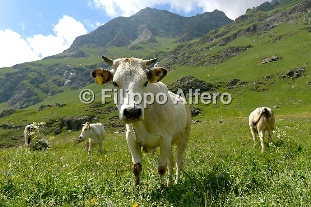 &copy; Filippo Alfero<br /> Rifugio Vulpot, Malciaussia, GTA, Tour della Bessanese, Anello del Rocciamelone<br /> Usseglio (TO), 30/06/2013
