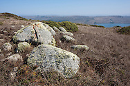 Several large lichen-covered stones overlook Tomales Bay, Point Reyes National Seashore