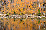 North Lake Fall Color Reflections, Inyo National Forest, California