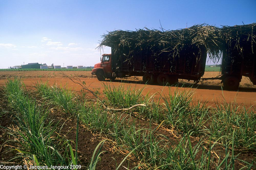Immature sugar cane plantation  and truck transporting sugar cane to ethanol processing plant in cerrado (savanna) region being devastated, Sao Paulo State, Brazil