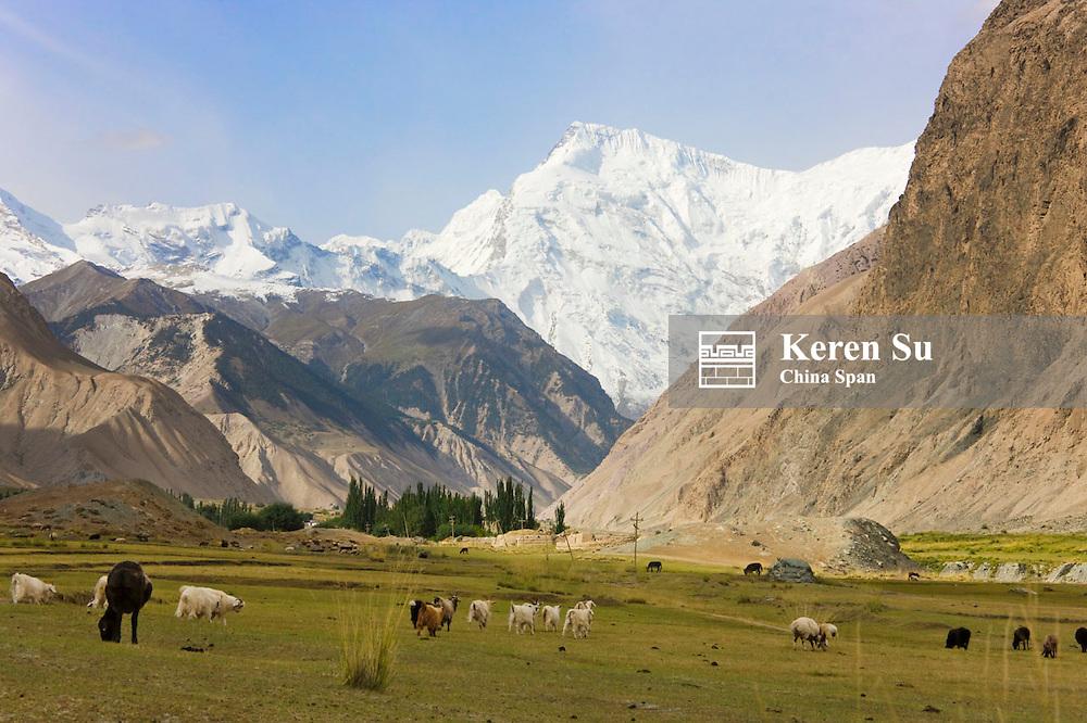 Sheep in Aoyitage Valley, Pamir Plateau, Xinjiang, China