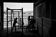 Mary Schieffer, 8, sweeps up inside the barn as her sister Ruth Schieffer, 12, milks a goat during daily chores, Tuesday, Aug. 7, 2012, at Schieffer family farm in Berthoud..(Matthew Jonas/Times-Call)